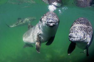Nachhaltigkeitsziel 14: Leben unter Wasser