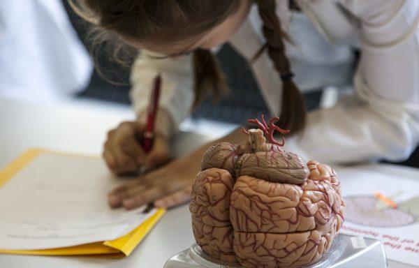 Deutsche Neurowissenschaften-Olympiade
